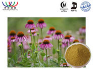 China Extrato anti-bacteriano da planta do Echinacea, extrato medicinal da raiz de Purpurea do Echinacea empresa