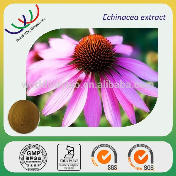 Pó erval do extrato do purpurea do echinacea do extrato do Echinacea de China